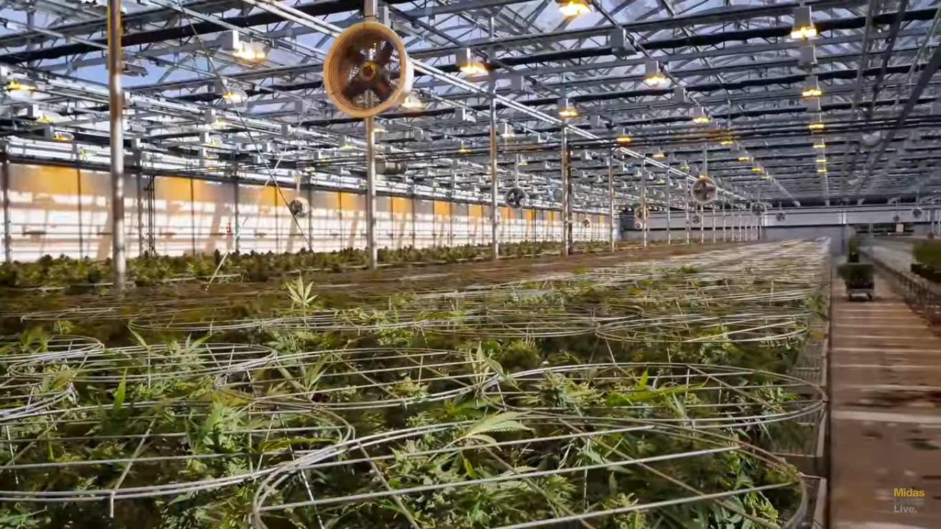 HEXO Corp (TSE:HEXO) Could Be THE Lowest Cost Producer – And It's Pumped For Recreational Use (Site Tour)